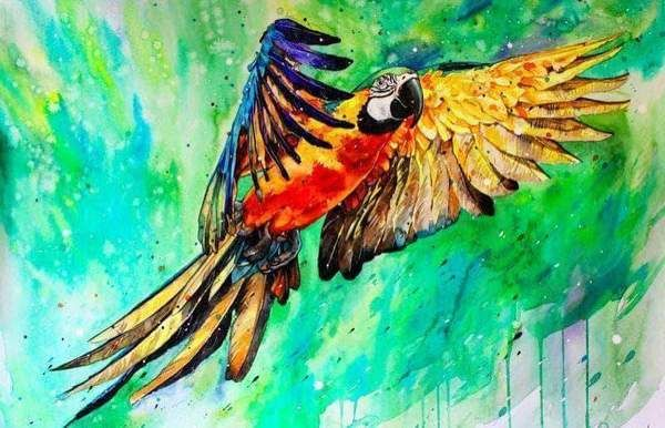 Parrot Art Square Diamond Painting | Картинки