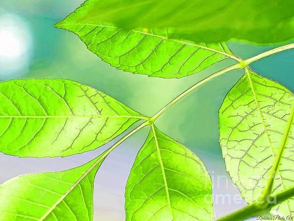 Spring Elm Leaves - Digital Paint