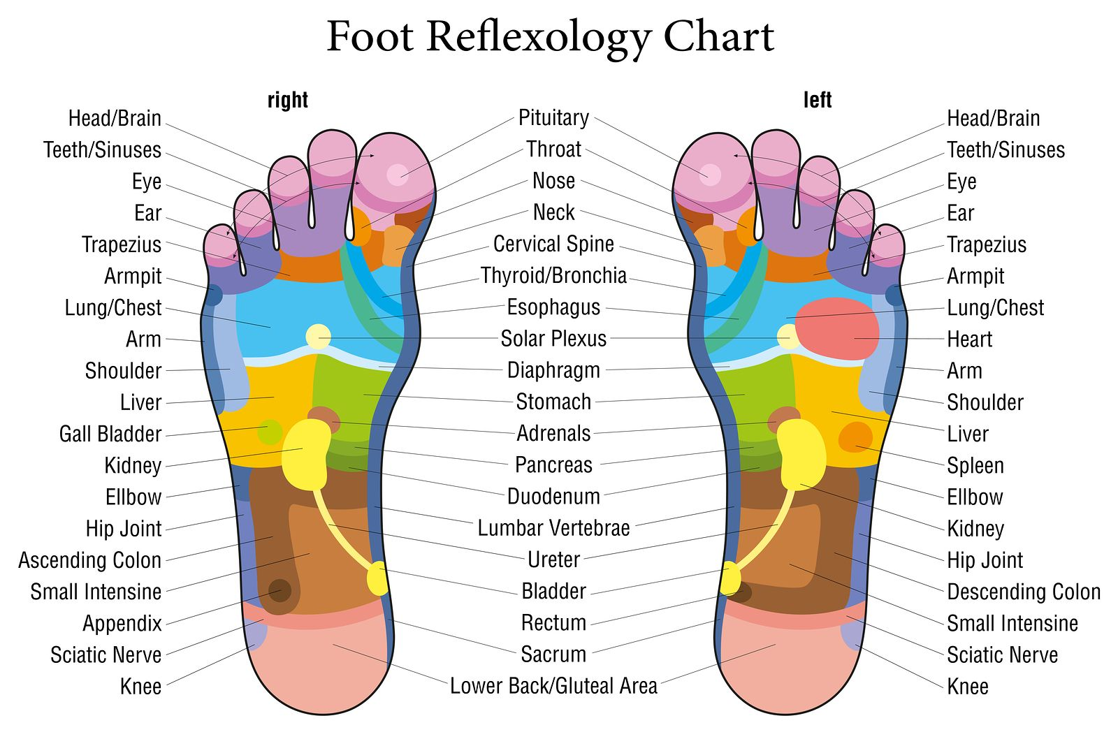 Top 10 essential oils foot reflexology chart foot reflexology foot reflexology chart essential oils can be quickly absorbed through the feet the pooptronica Image collections