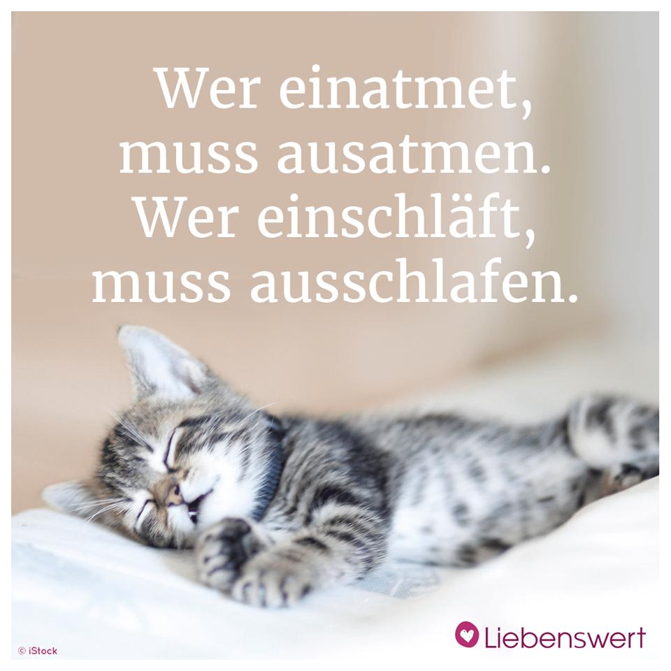 Wie Lange Schlafen Katzen Und Hunde Germany Wie Lange