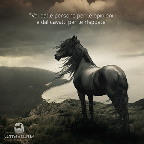 Super Una #perla di saggezza direttamente dall'antica Cina #cavallo  NA98