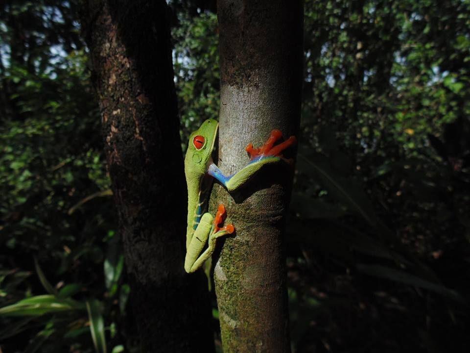 Fauna of Tortuguero National Park, Costa Rica.