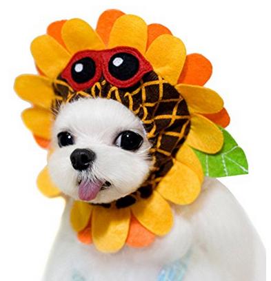 maltese dog halloween costume ideas
