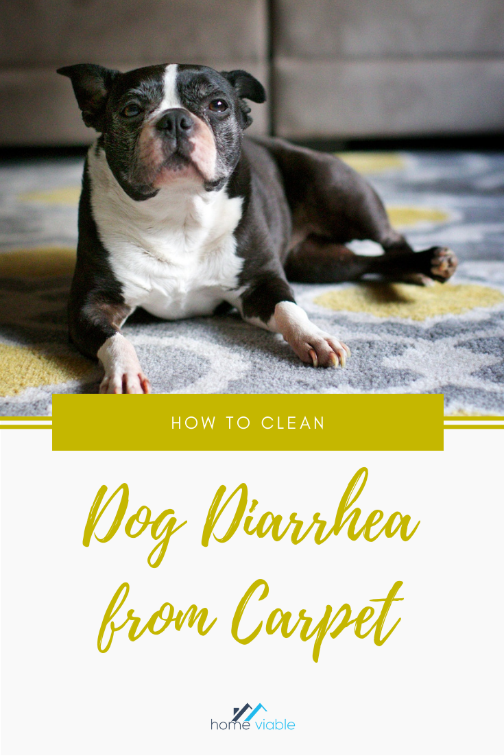 Best Way To Remove Pet Diarrhea From Carpet Carpet