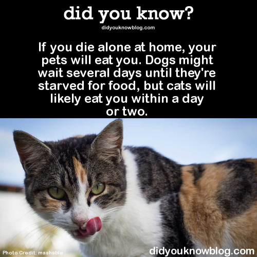 My Cat Has Not Eaten For  Days