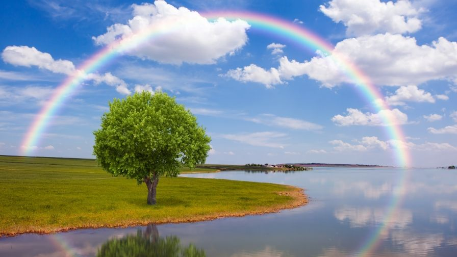 Rainbow Tree Hd Wallpapers Download Rainbow Wallpaper Tree Hd Wallpaper Rainbow Pictures