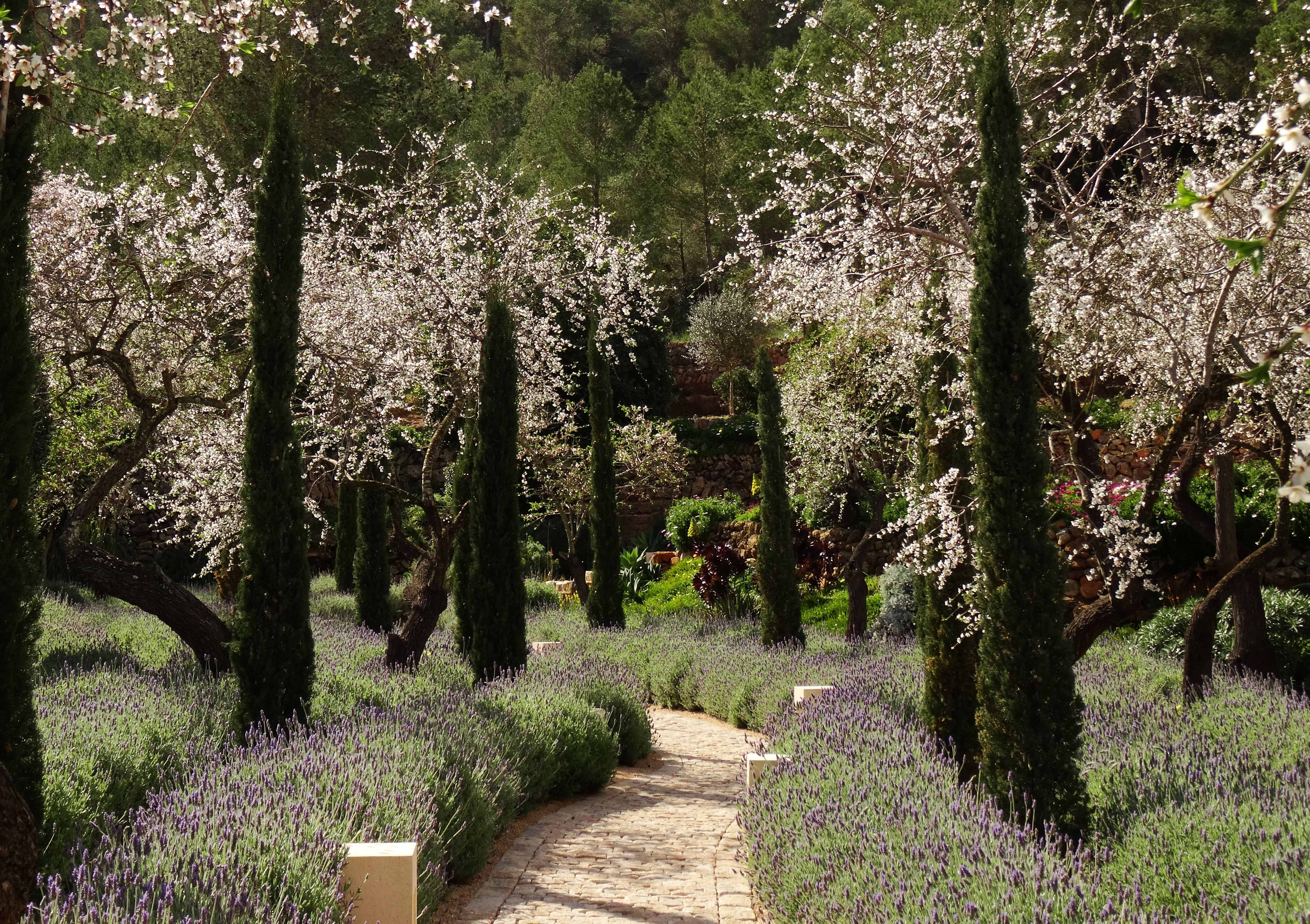 Almonds in bloom, cypresses and lavender flank this winding path ...