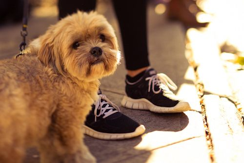 3 Dog-Friendly 5K Runs in May! Get out those running shoes and bring your pooch :D