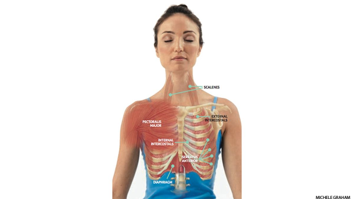 Anatomy 101: How to Tap the Real Power of Your Breath | Pranayama ...