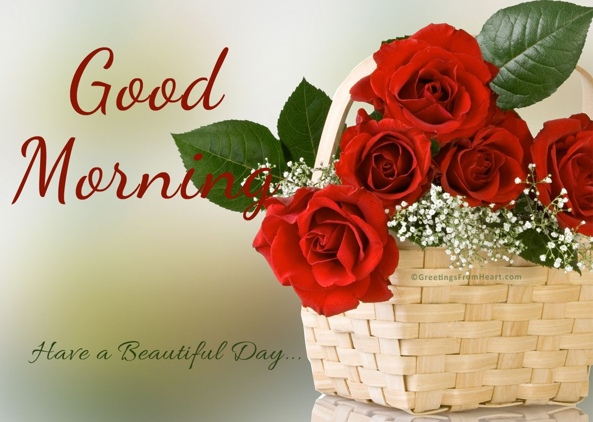 Good Morning With Basket Of Red Roses Good Morning Beautiful Flowers Good Morning Flowers Good Morning Photos