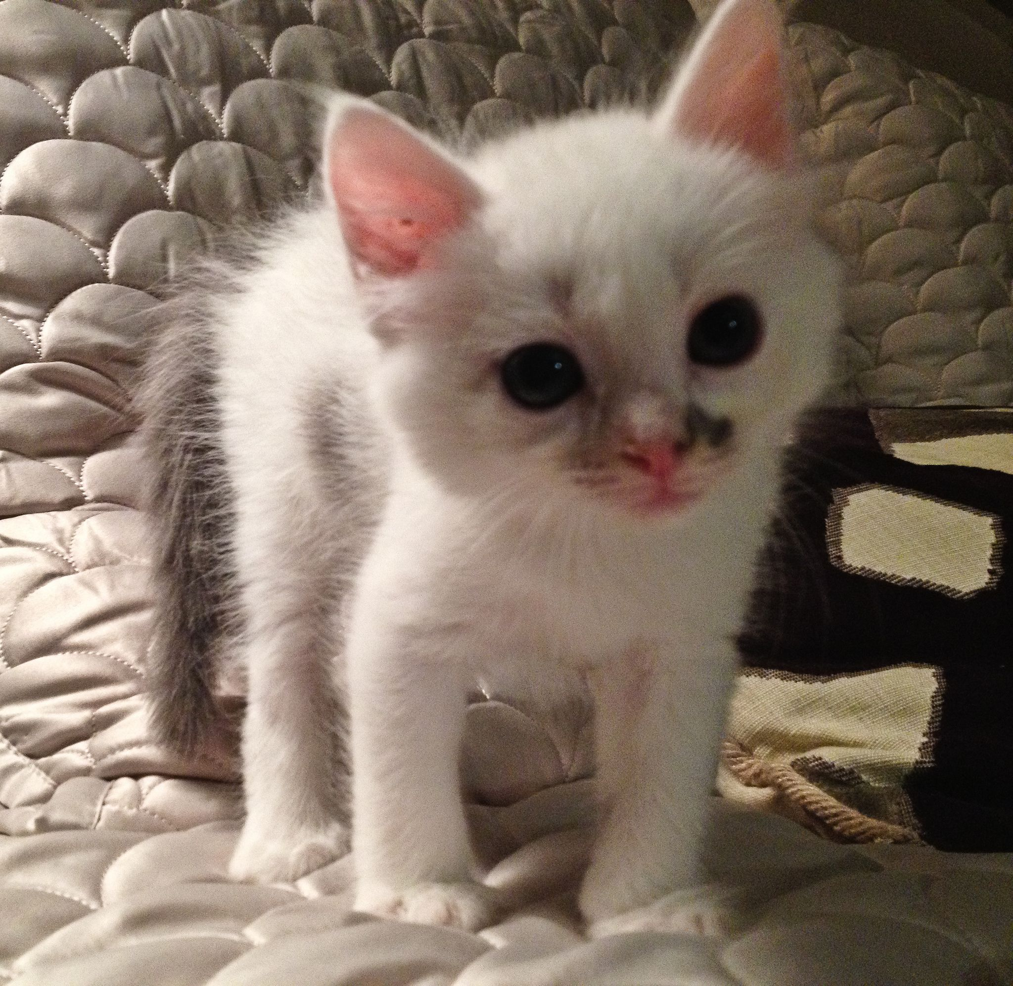Adorable kittens animals and pets pinterest kittens and