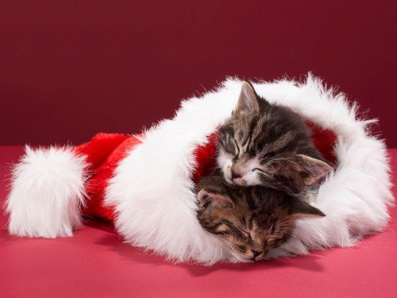 132 best Poze de Craciun images on Pinterest | Christmas time ...