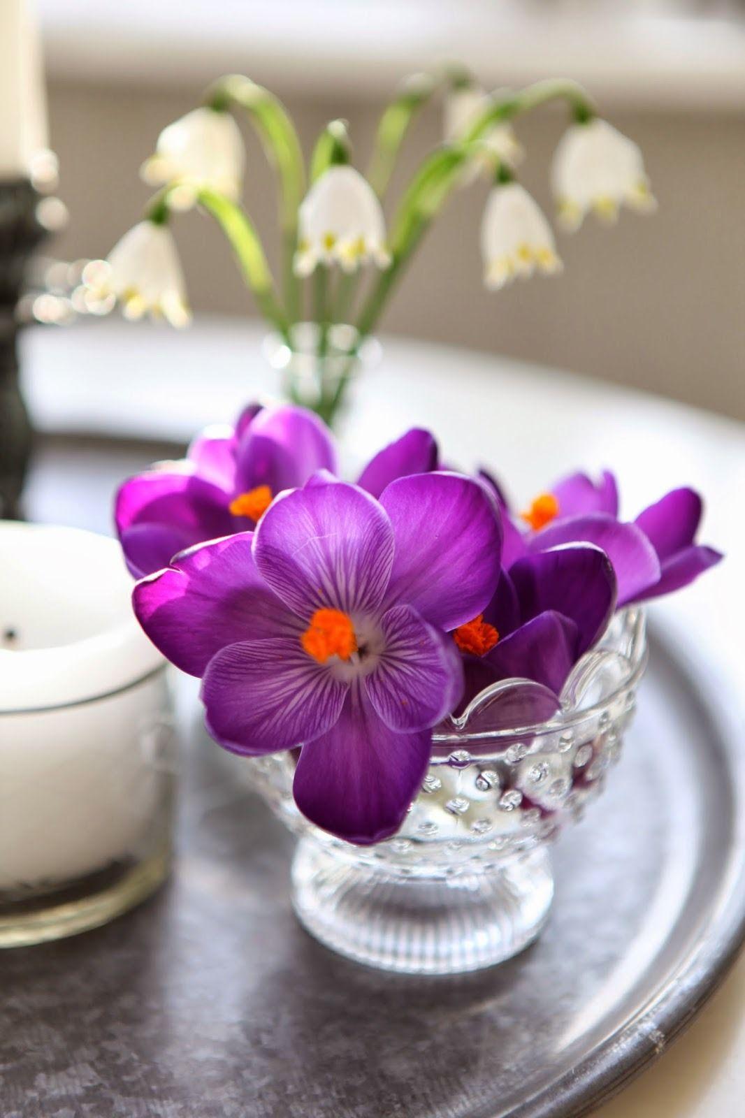 「Flowers」おしゃれまとめの人気アイデア|Pinterest|Barbara Haskell フラワー