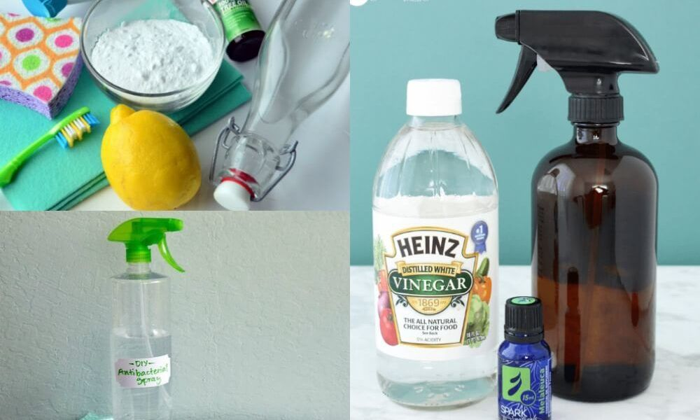6 diy natural ways to clean your entire home with tea tree