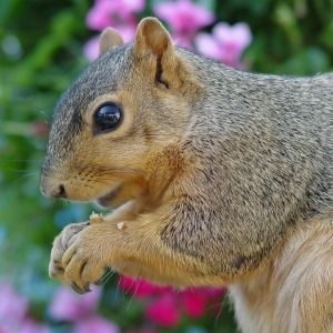 Keeping squirrels from digging in plants garden - How to keep squirrels from digging in garden ...