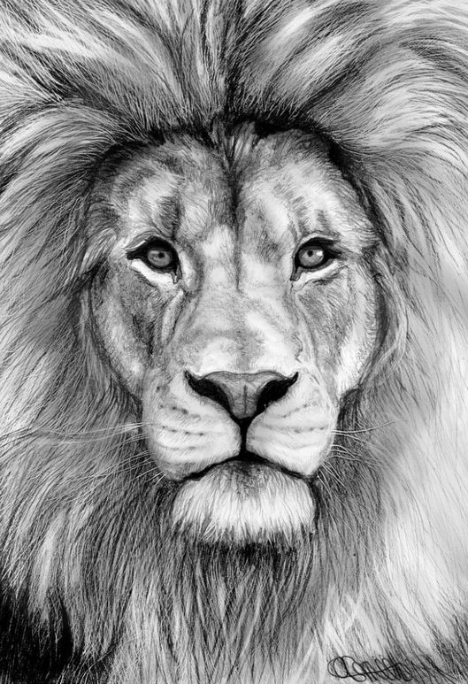 Izu The Lion Realistic Animals Healthportal4u Info Lion Face Drawing Lion Sketch Pencil Drawings Of Animals