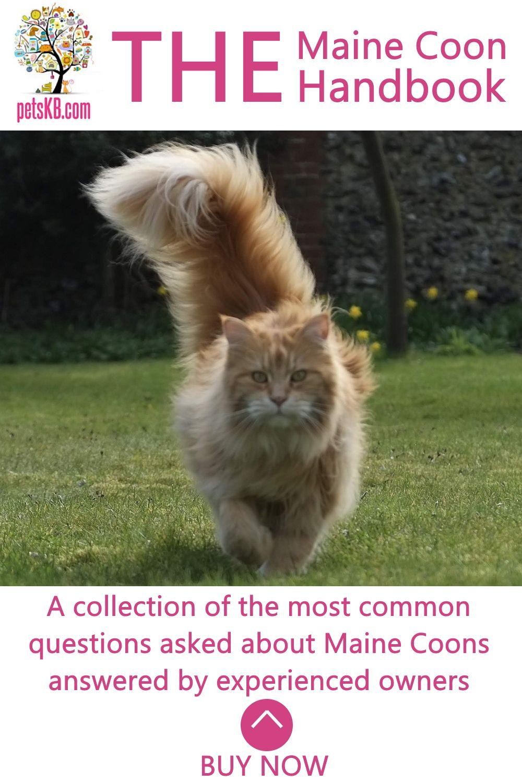 Pin On Cat Info