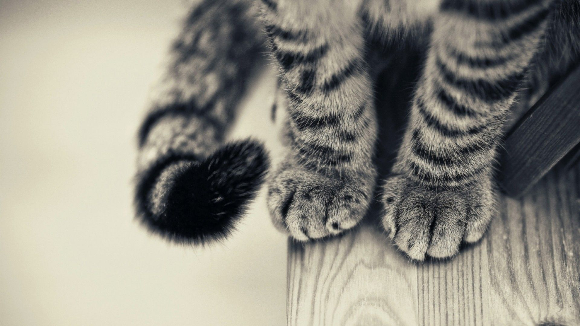 Pattes De Chat Chat Mignonneries Cats Cat Paws Cats And Kittens