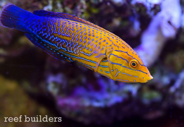 Behind The Face Of Liveaquaria Kevin Kohen S Fish Collection Part 1 Saltwater Fish Tanks Reef Safe Fish Saltwater Aquarium