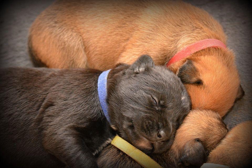 Tierschutz Wie Die Pharmaindustrie Unsere Haustiere Krank Macht