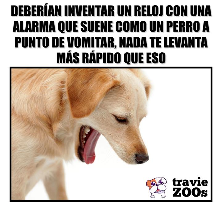 No Te Vomites Ya Voy Fotos De Animales Perros Perro Gato