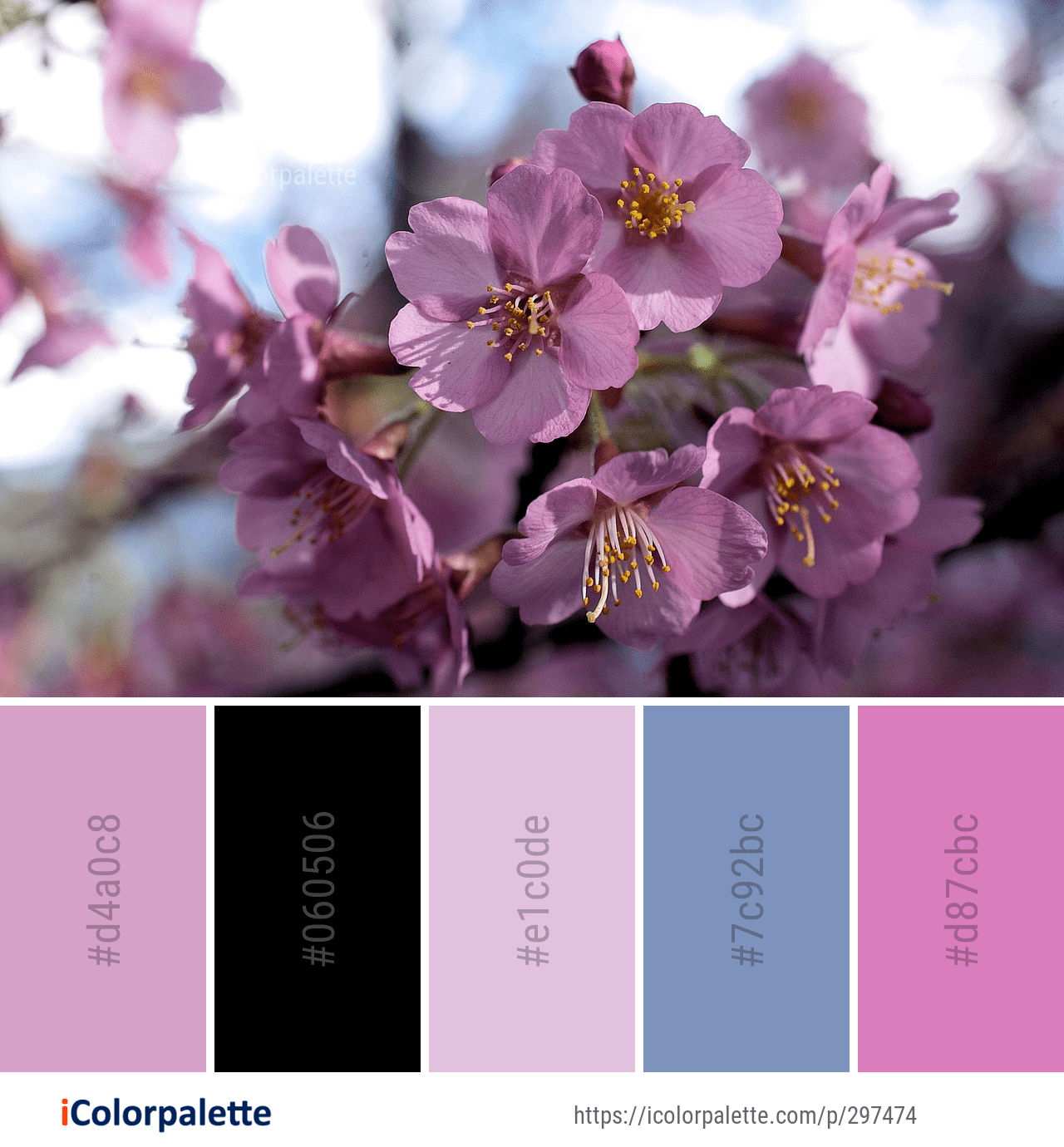 Color Palette Ideas From 1804 Blossom Images Icolorpalette Color Schemes Colour Palettes Blue Color Schemes Color Palette