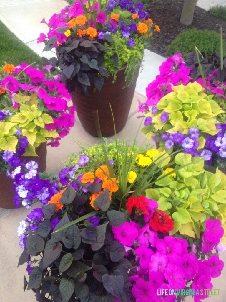 19 plants Beautiful planters ideas