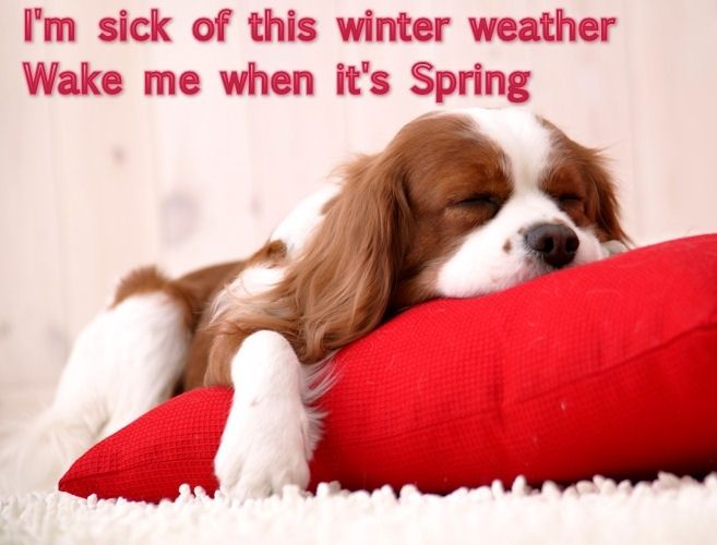 Wake Me When Its Spring Funny Quotes Cute Animals Quote Winter
