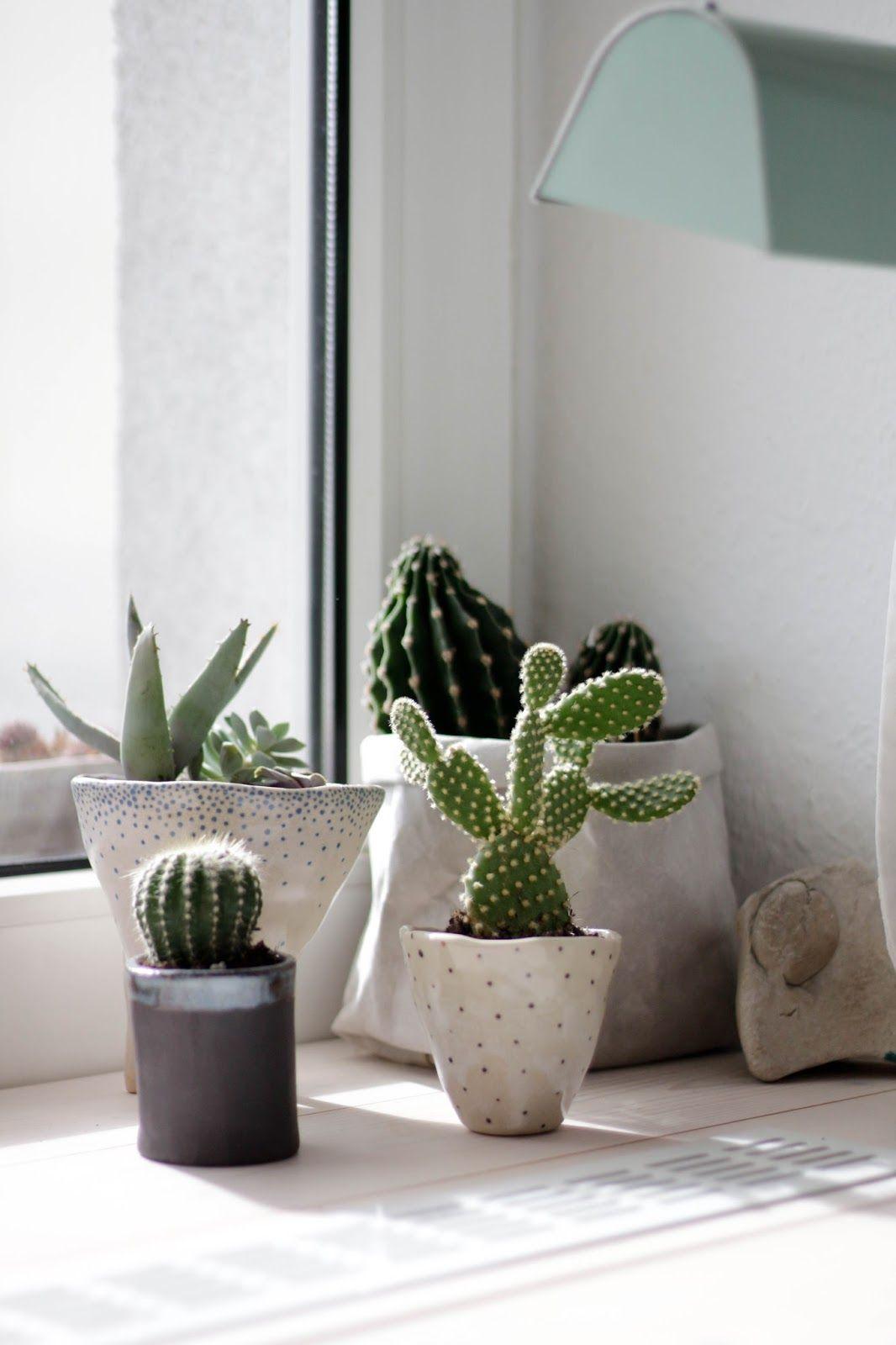 Kakteen für den Schreibtisch | Greenery ♧ | Kaktus, Topfblumen und ...