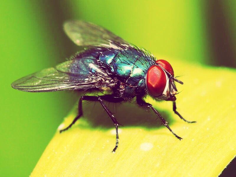 1 Cool Way To Get Rid Of Flies Get Rid Of Flies Flies Outside