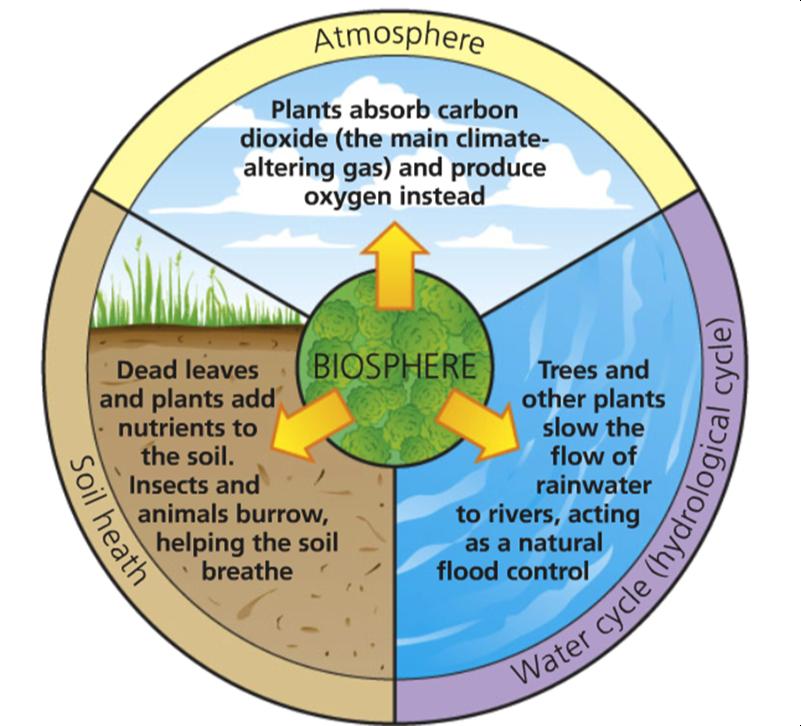 Image Result For Biosphere Anthroprocene Pinterest Diagram
