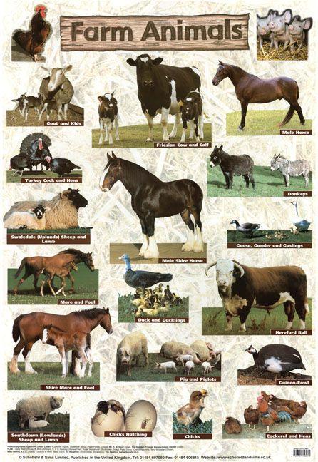 farm animals poster education animals