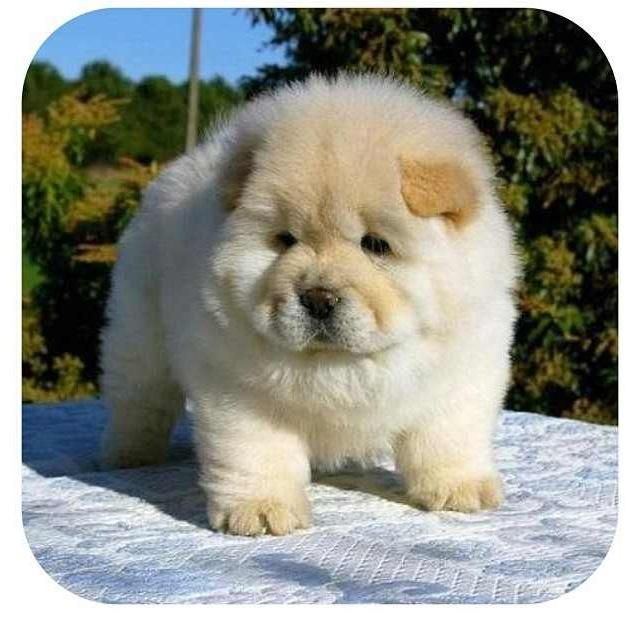 Dog Name For Chubby Pup