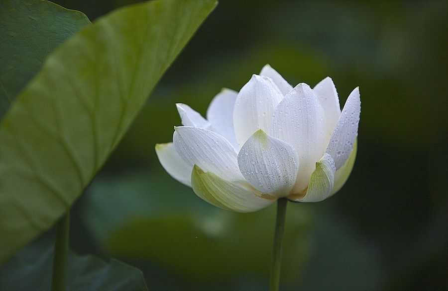 "500px / Photo ""flower"" by sangsoon nam"