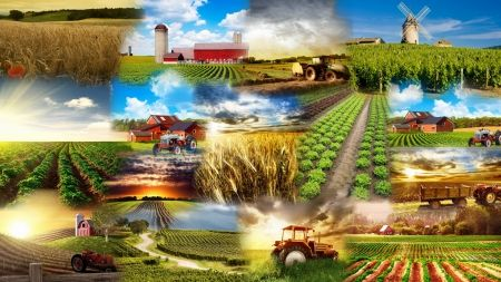 HD Fields Nature Wallpapers Agriculture Collage | Modern ...