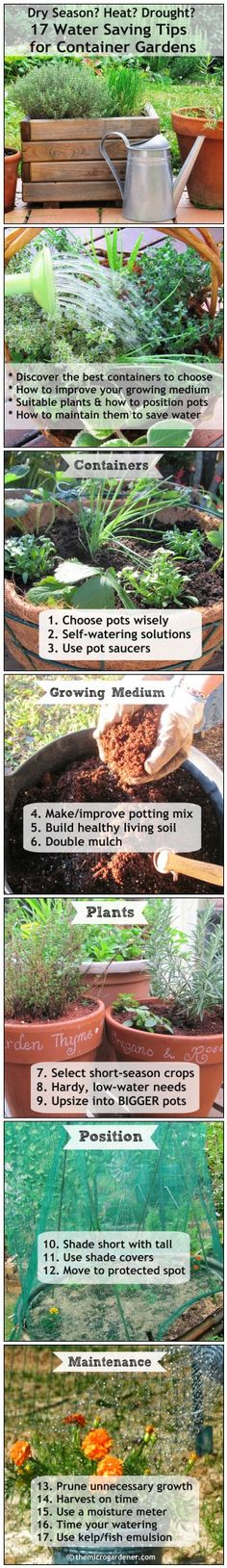 ac472f521dac8cfba853592076ac10f9 - What Type Plants Are Suitable For Micro Gardening