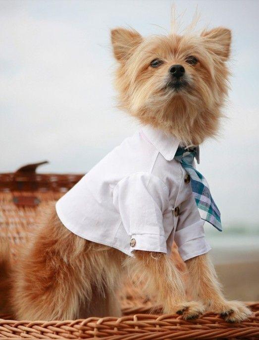 3345ffedeebc7 Business casual Dog Shirt, Cute Puppies, Cute Dogs, Dog Outfits, Dog Wedding