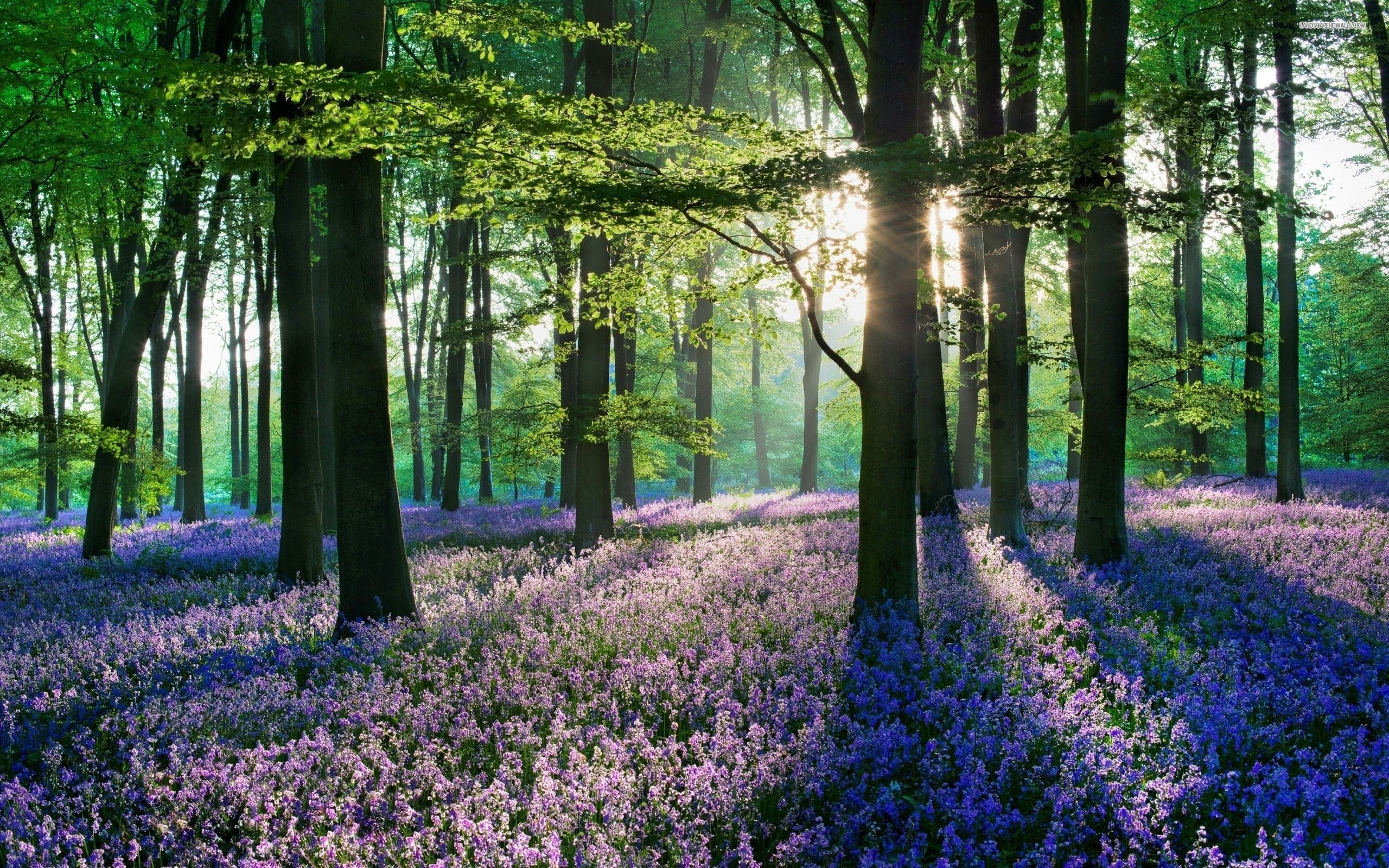 Flowers In The Woods Wallpaper