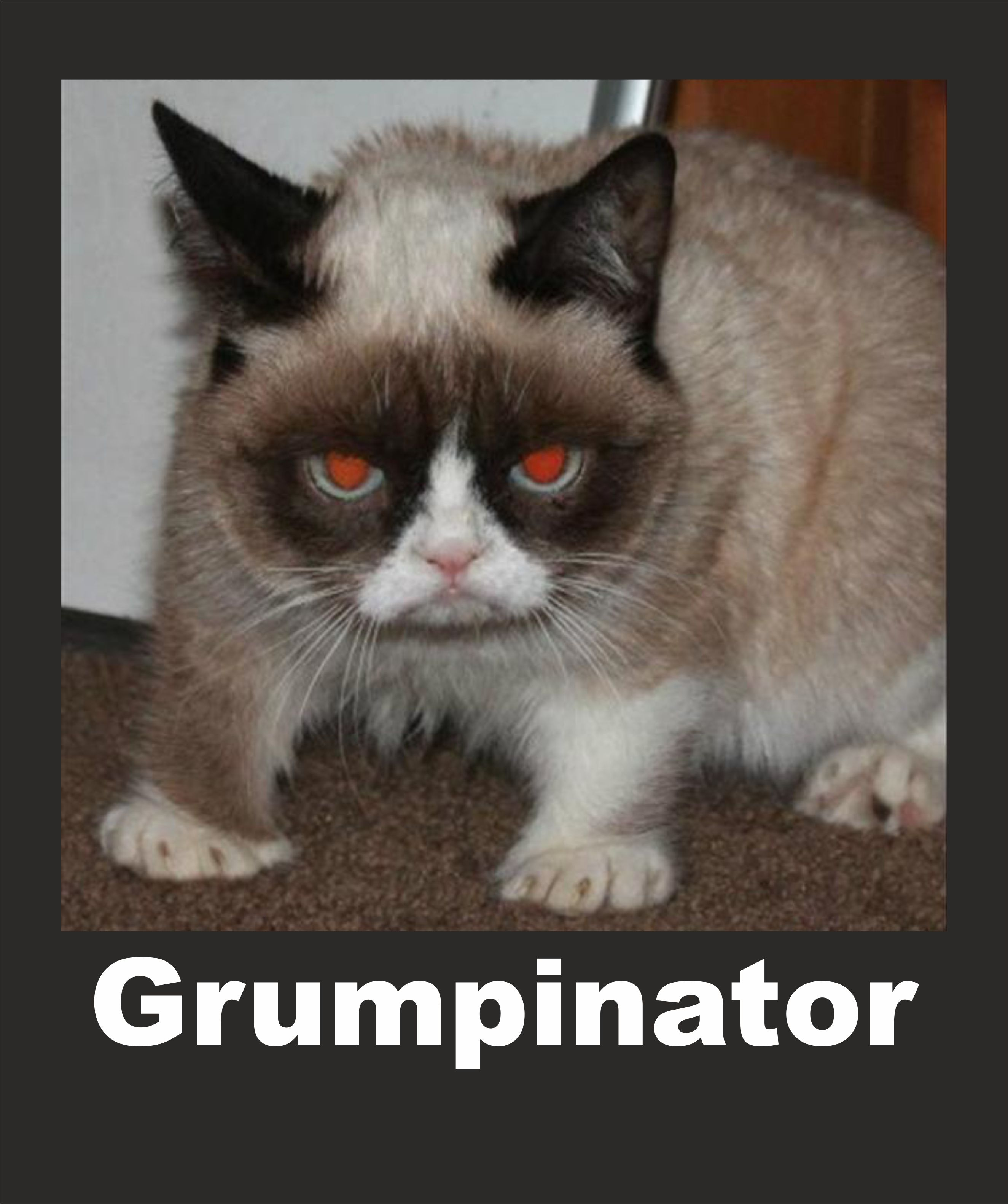 Pin By Brenda King Malone On Funny Things Cat Memes Clean Funny Cat Memes Grumpy Cat Memes Clean