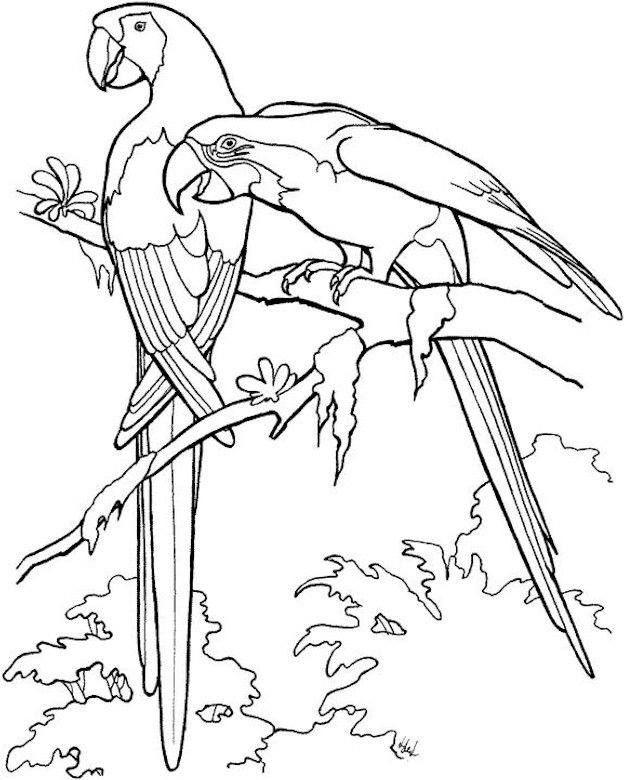 Papegaaien | Sanctuary | Bird coloring pages, Adult coloring ...