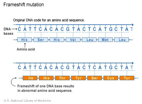 A frameshift mutation changes the amino acid sequence from the - amino acid chart