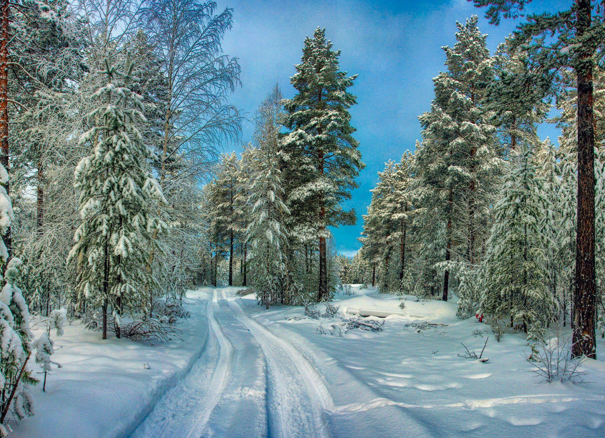 Country lane in winter (Russia) by Tatiana Borisova on ...