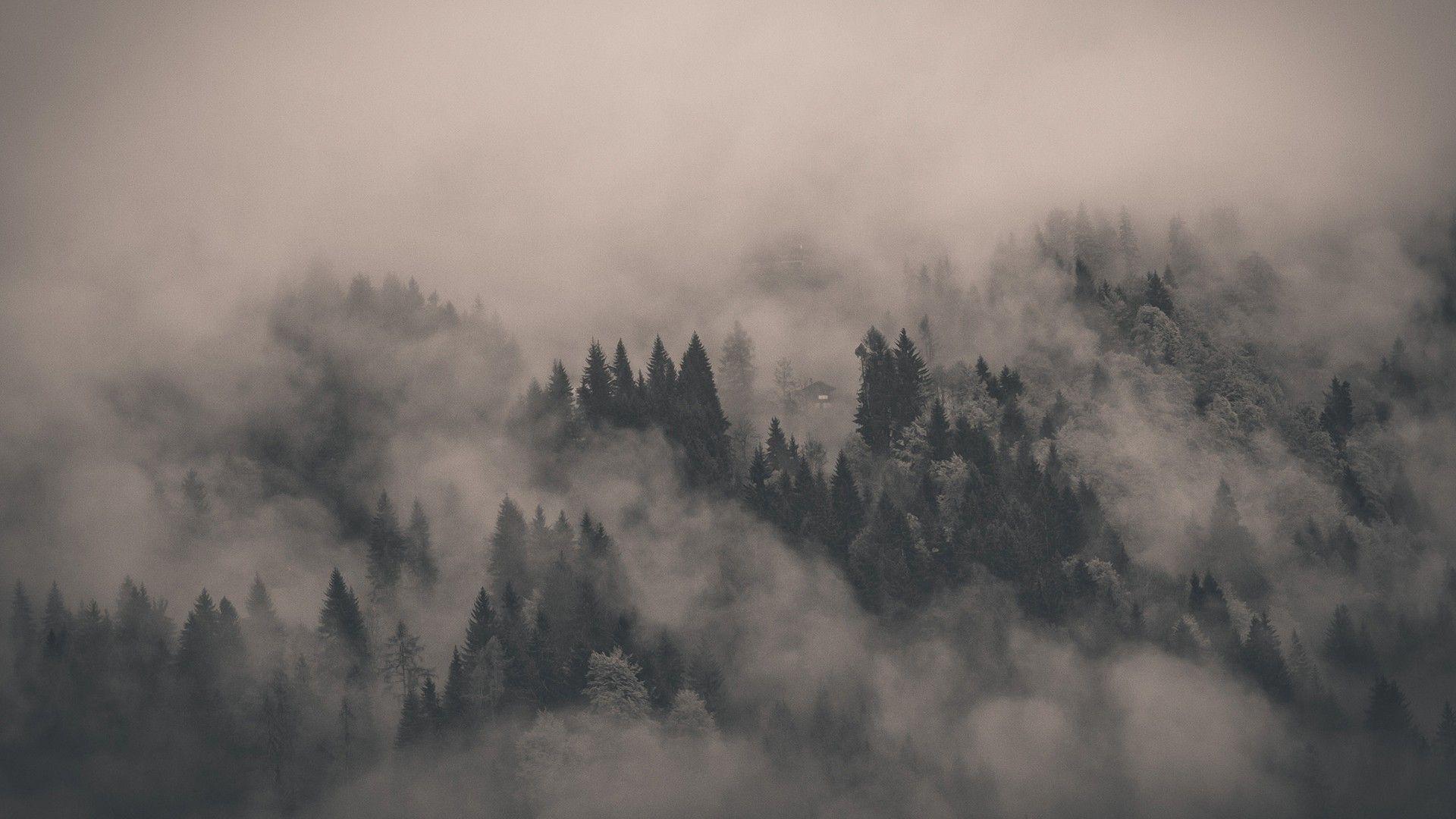 Creepy Landscapes Nature Trees Fog Mist Atmospheric Forest Wallpaper 2935650 Wallbase Cc Landscape Wallpaper Dark Landscape Dark Wallpaper