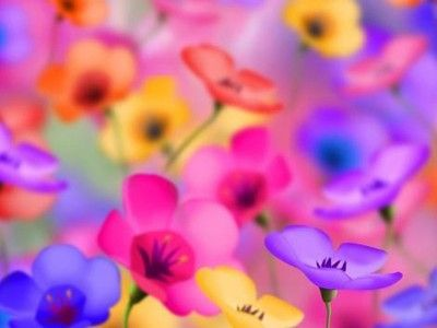 Colourful Flowers Wallpaper Colourfull Flowers Light Colour Background Beautiful Flowers Wallpapers Colorful Flowers Flower Backgrounds