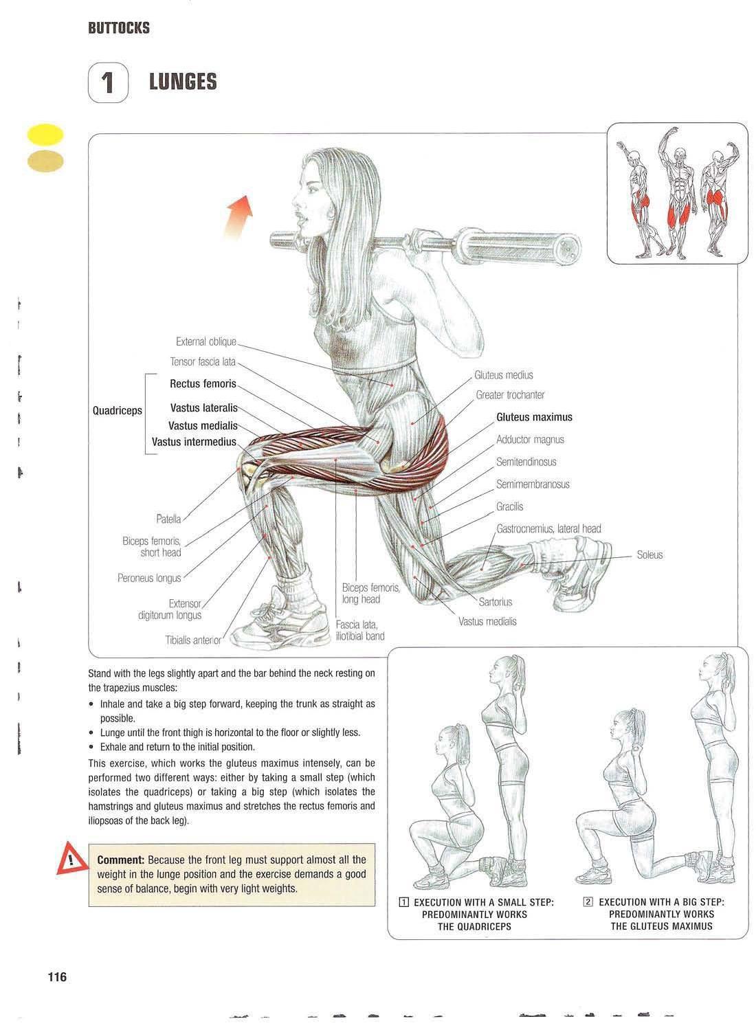Colorful Anatomy Of The Buttocks Frieze - Anatomy Ideas - yunoki.info