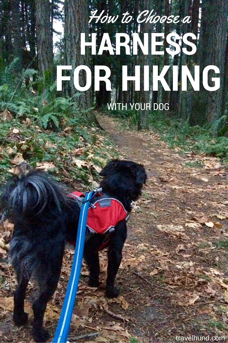 Need Help Choosing A Harness For Hiking With Your Dog Check Out