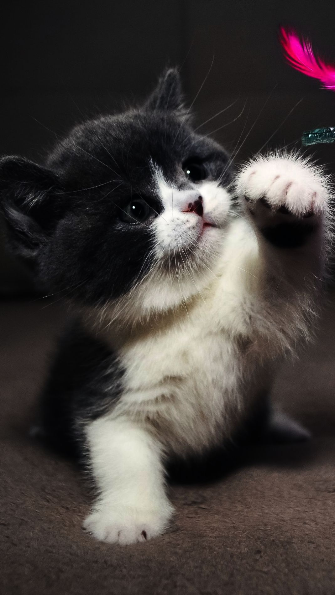 Cats And Kittens Brisbane Cats And Kittens On Youtube Kittens Cutest Cute Cats And Kittens Cute Animals
