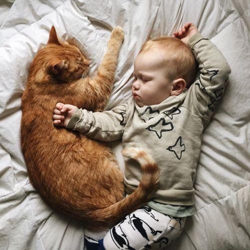 ネコと女性,ちょいエロ,心的風景
