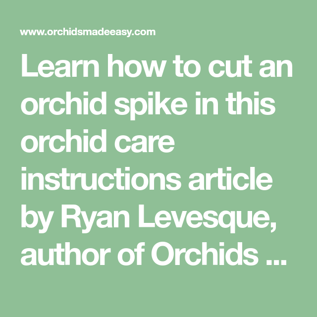 Learn How To Cut An Orchid Spike In This Orchid Care Instructions