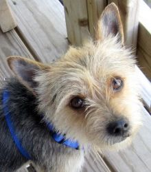 Adopt Angel On Mixed Breed Dogs Cute Animals Humane Society